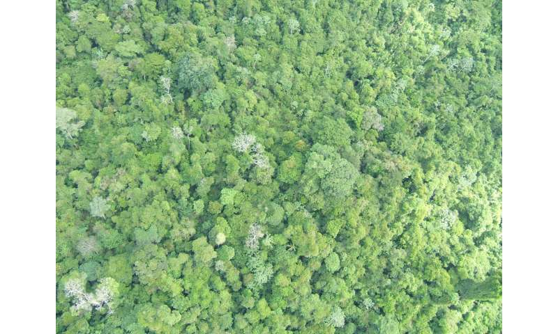 Climate policies alone will not save Earth's most diverse tropical forests