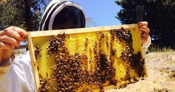 Coal miners shift to beekeeping