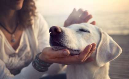 Companion animals delay women leaving domestic violence