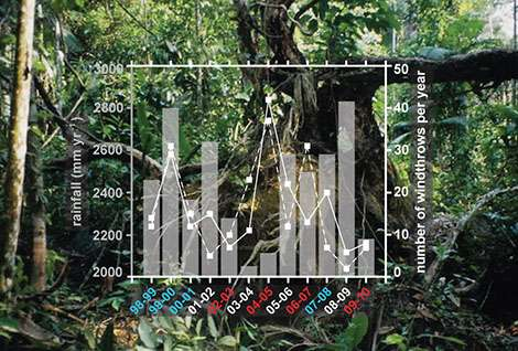 Consequences of gaps of uprooted or broken trees in Amazonia