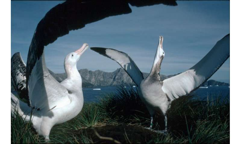 Conservation plans to protect the albatross