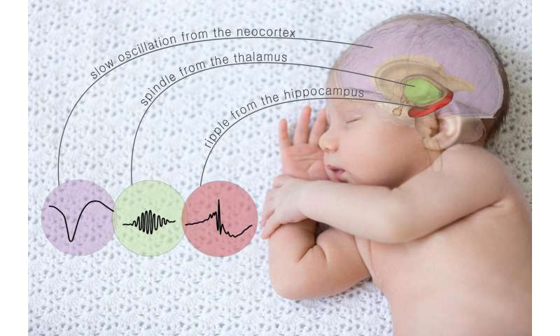 Controlling memory by triggering specific brain waves during sleep