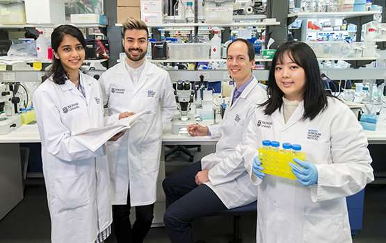 Controlling nerve injury repair revealed in Monash University study