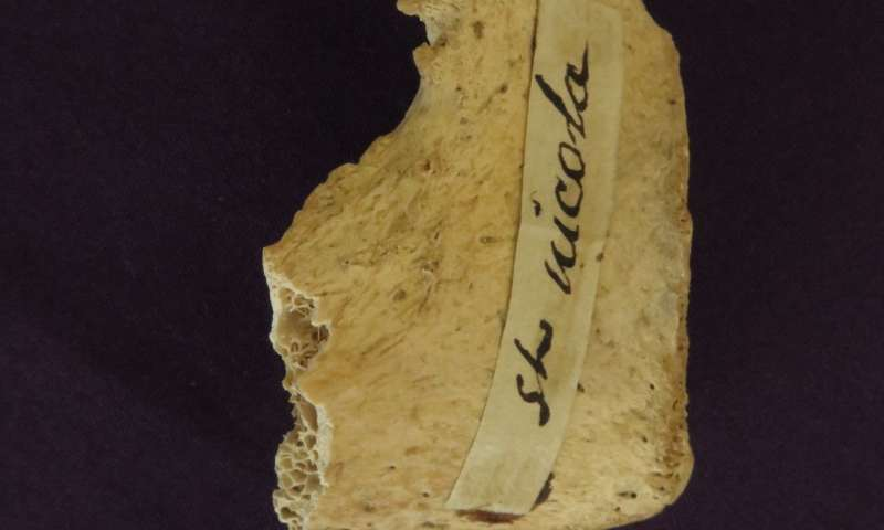 Could ancient bones suggest Santa was real?