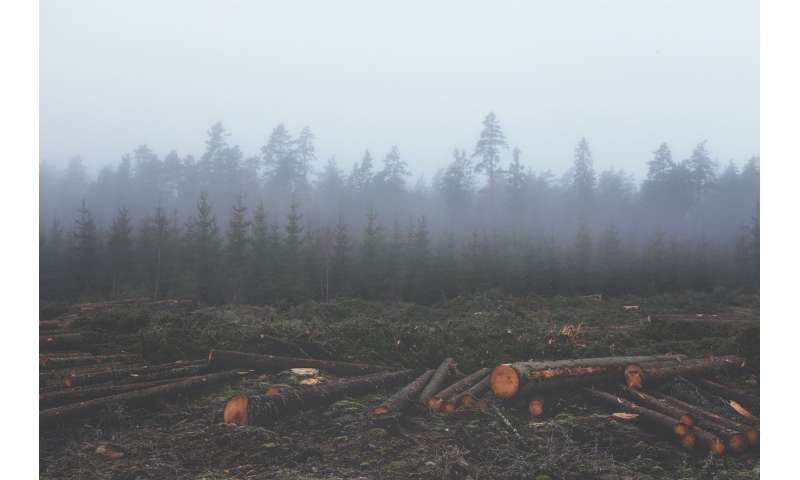Counting the carbon cost of forest destruction