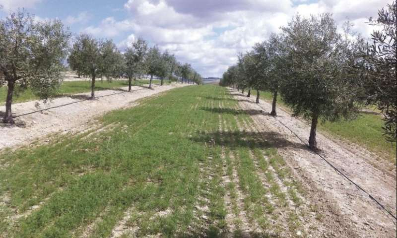Cover crops may be used to mitigate and adapt to climate change