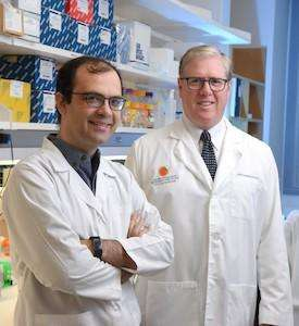 CRI scientists discover vitamin C regulates stem cell function, curbs leukemia development