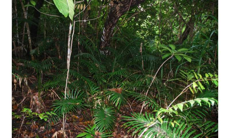 Cycad leaf physiology research needed