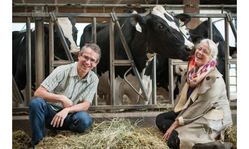 Dairy farmers should rethink a cow's curfew, says UBC researchers
