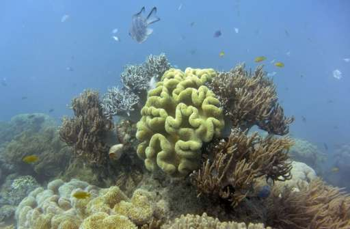 Damage to Australia's Great Barrier Reef could lead to a drop in tourism and the loss of 10,000 jobs