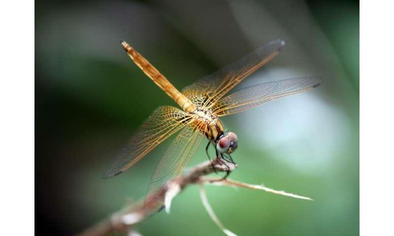 David Attenborough gains new species namesake
