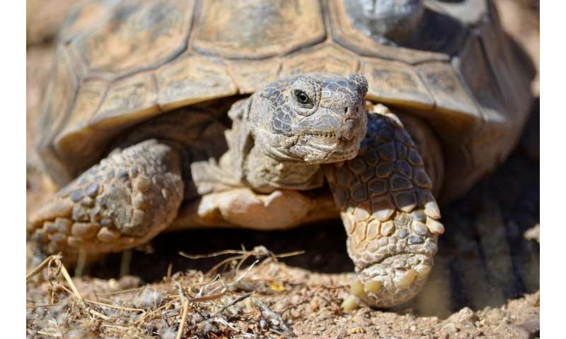Decoded genome may help tortoise win race to survive