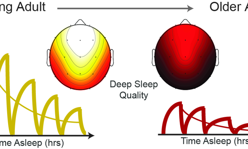 Deep sleep may act as fountain of youth in old age