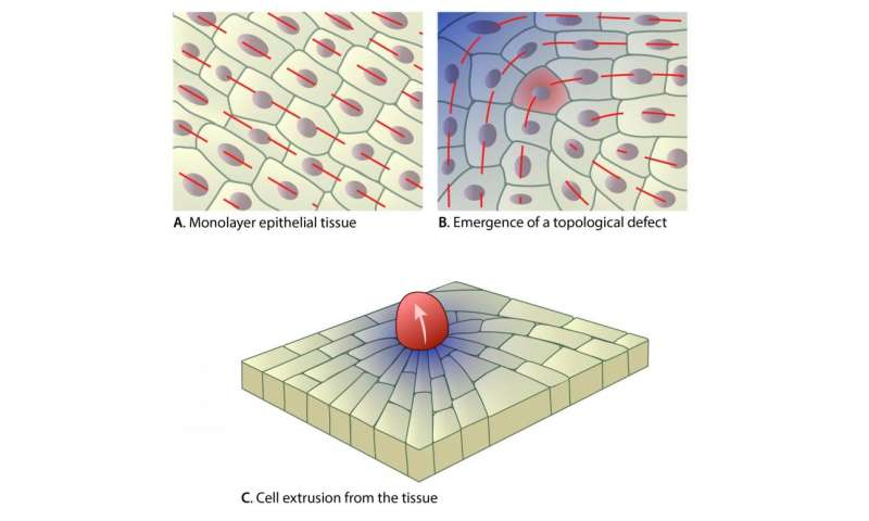 Defects in epithelial tissue organisation – A question of life or death