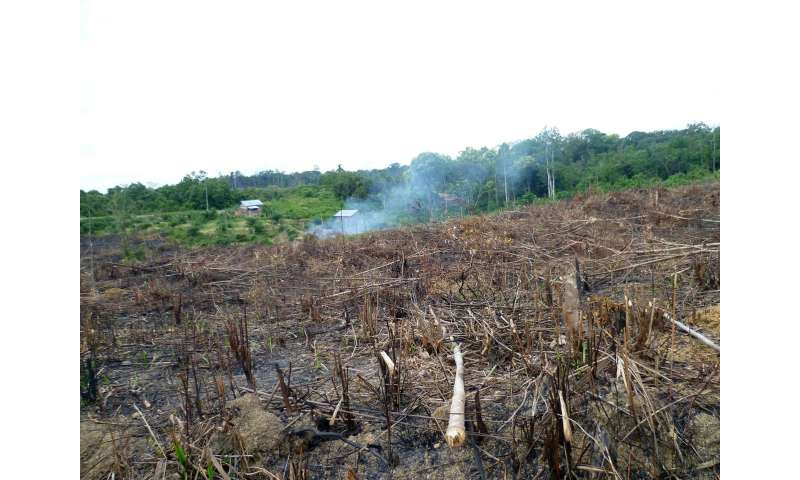 Deforestation linked to palm oil production is making Indonesia warmer