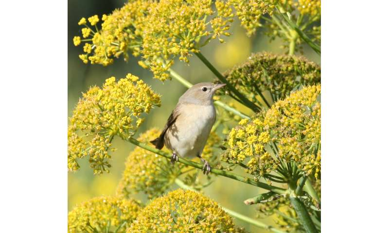 Departure of migratory birds from stopover sites is hormone-controlled