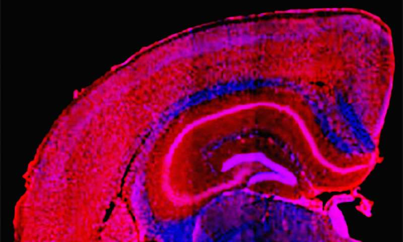 Designer compound may untangle damage leading to some dementias