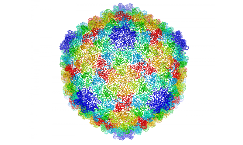 Detailed chemical structure of P22 virus resolved