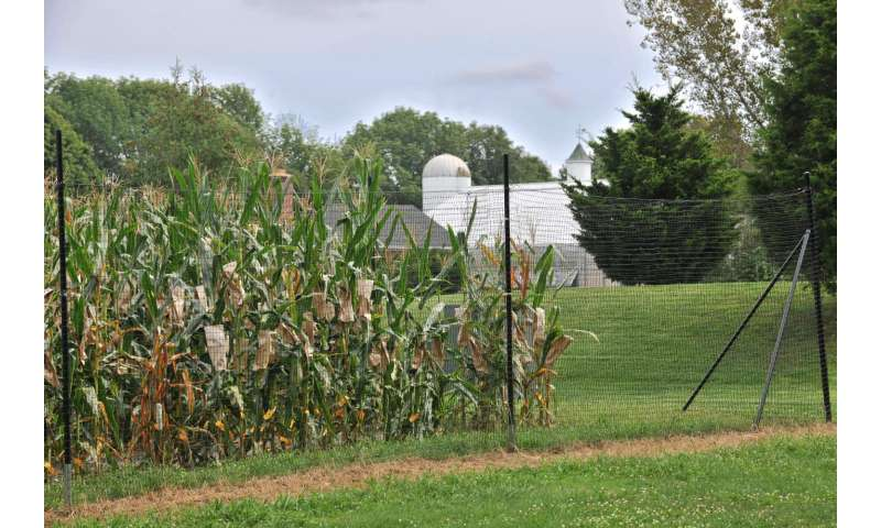 Detailed new genome for maize shows the plant has deep resources for continued adaptation
