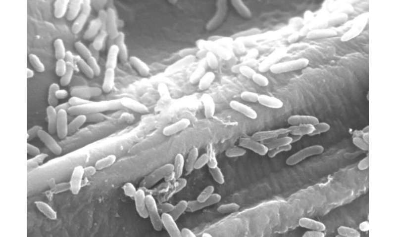 Detection of fermentation processes in electricity-generating bacteria