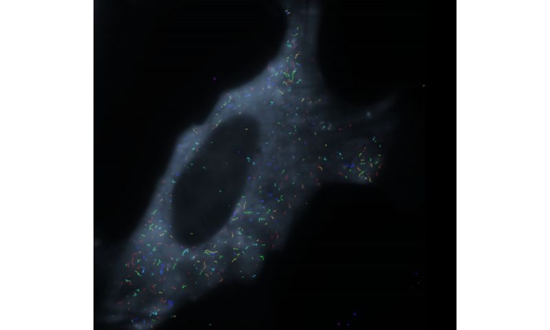 'Detective' iSHiRLoC investigates role of RNA, could help researchers study genesis of cancer