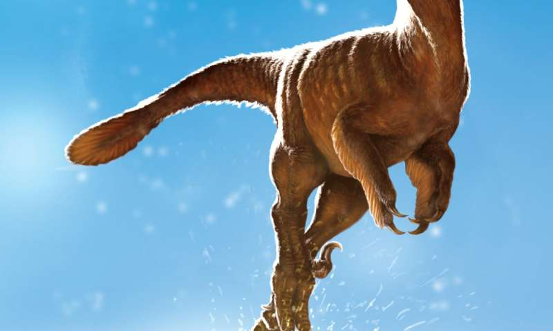 Dino hips discovery unravels species riddle