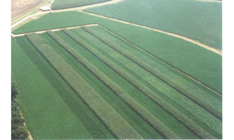 Diverse rotations and poultry litter improves soybean yield