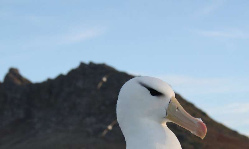 DNA tests on albatross poo reveal secret diet of top predator