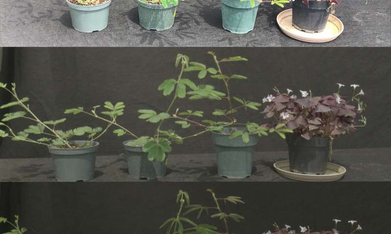 Does eclipse equal night in plant life?