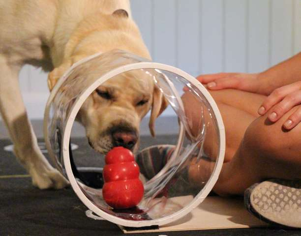 Dogs, toddlers show similarities in social intelligence
