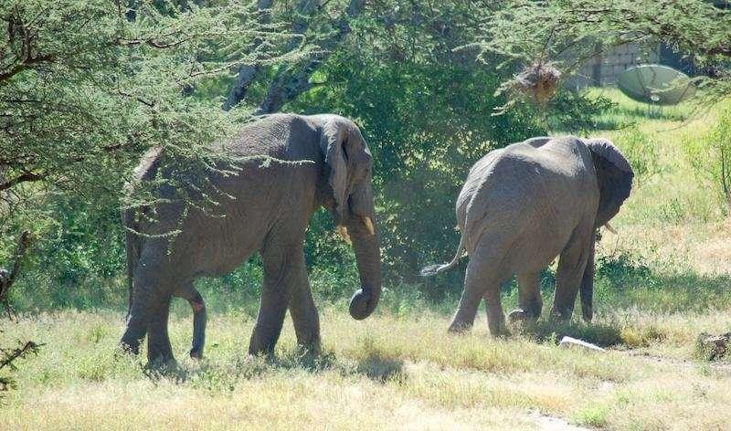 Dozens of new wildlife corridors identified for African mammals