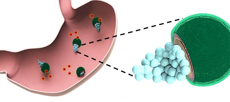Drug-delivering micromotors treat their first bacterial infection in the stomach