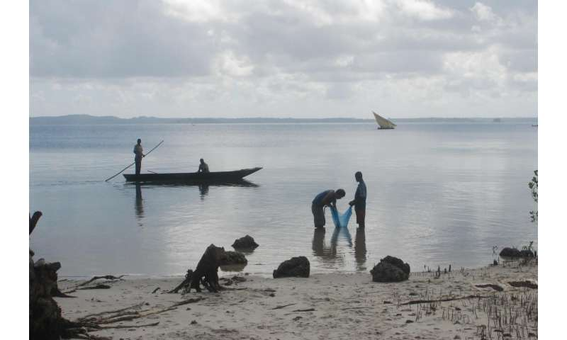 Early Indian Ocean trade routes bring chicken, black rat to eastern Africa