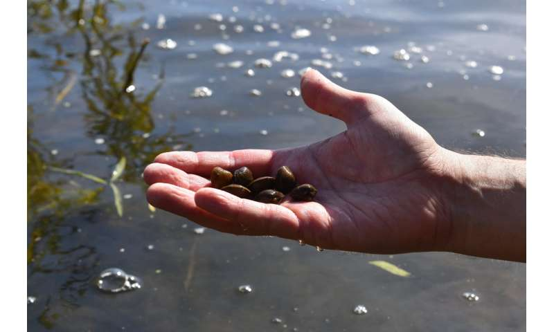 eDNA tool detects invasive clams before they become a nuisance