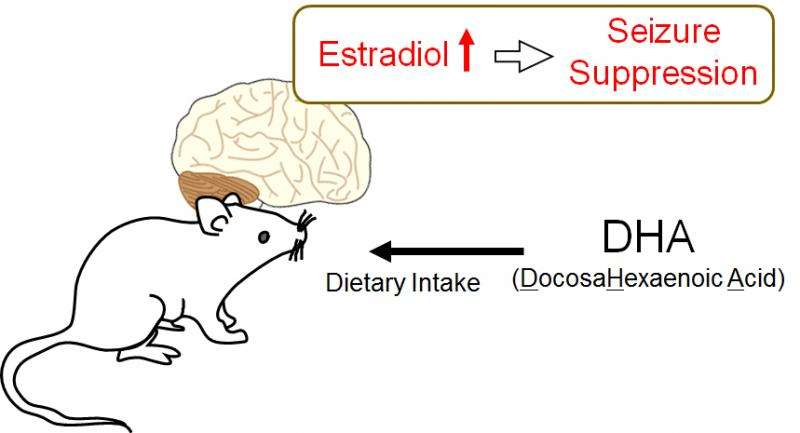 Estrogen-mediated brain protection directly linked to intake of fatty acids found in oils