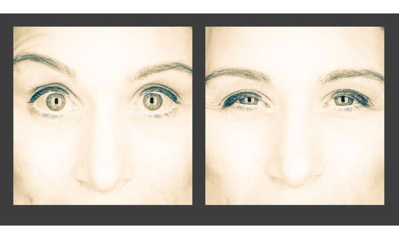 Eye expressions offer a glimpse into the evolution of emotion