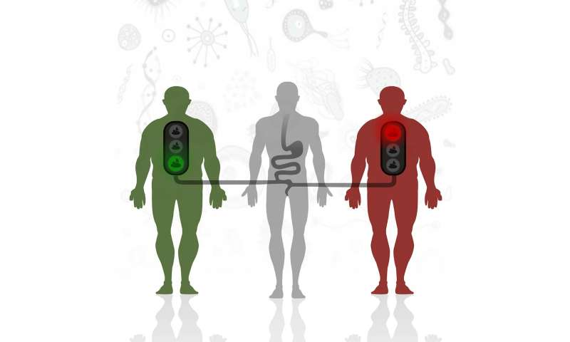 Fecal transplant success for diabetes might depend on the recipient's gut microbes
