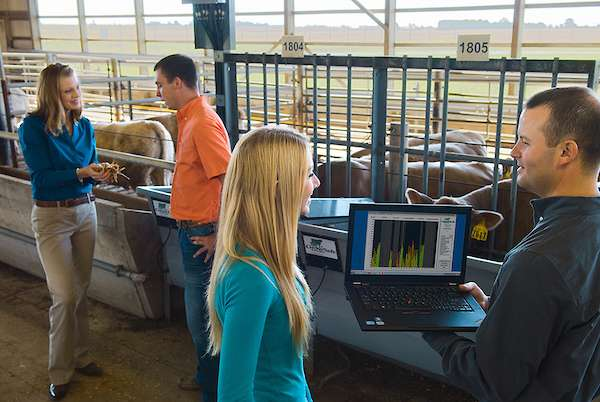 Feed intake study in beef cattle could lead to more efficient breeds