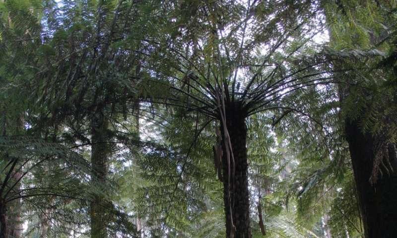 Fern fossil data clarifies origination and extinction of species