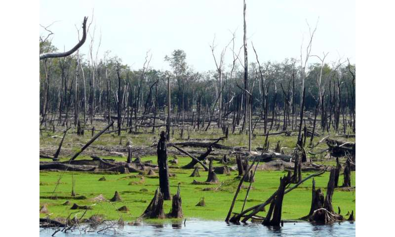 Flammable floodplains are weak spot of Amazon forest