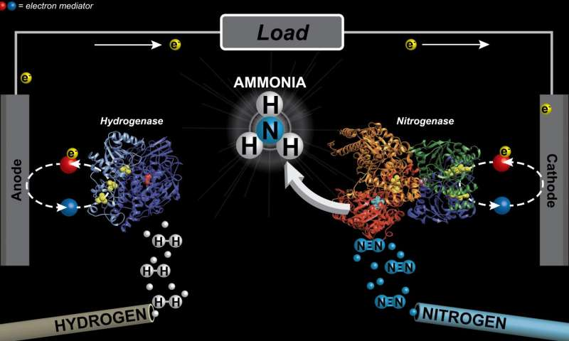 Flipping the switch on ammonia production