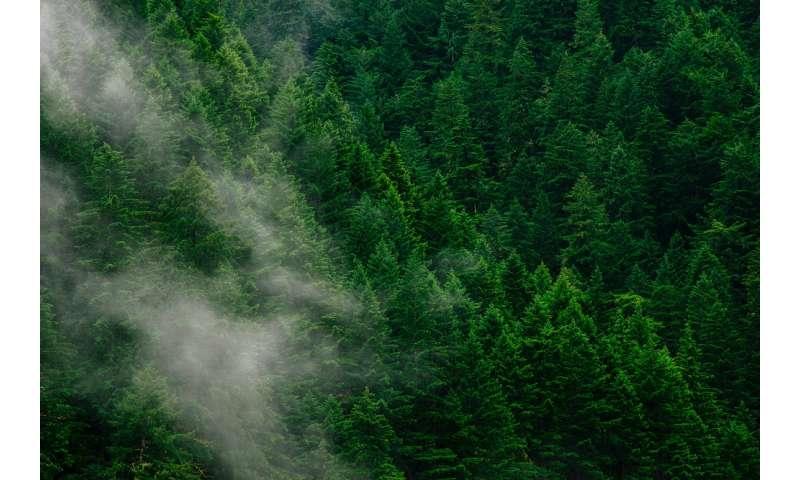'Forest mobilisation:' unlocking Europe's wood energy potential