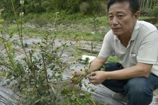 For years Huang Sheng-yi helped feed Taiwan's addiction to the betel nut, planting thousands of the trees on his mountainous far