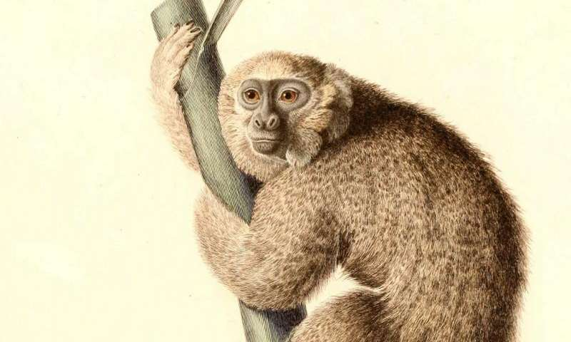 Fossil evidence suggests humans played a role in monkey's demise in Jamaica