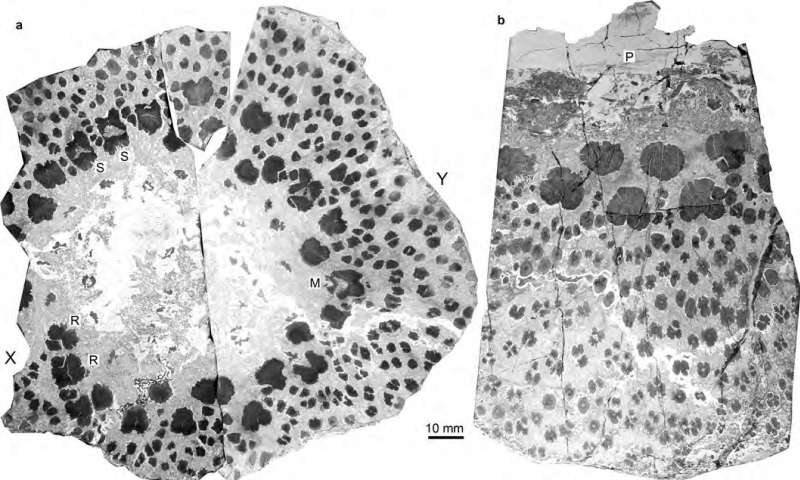 Fossils from the world's oldest trees reveal complex anatomy never seen before