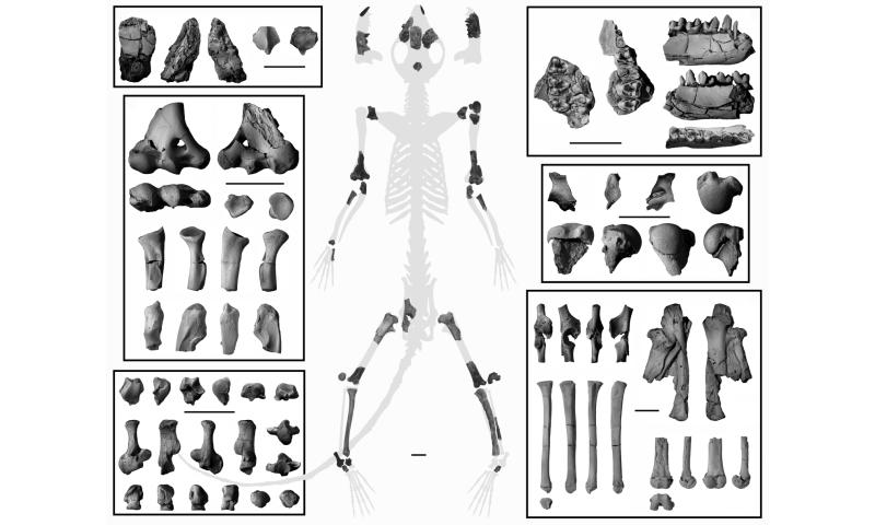 Fossil skeleton confirms earliest primates were tree dwellers