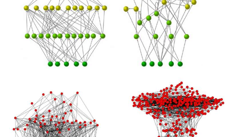 Four directed networks