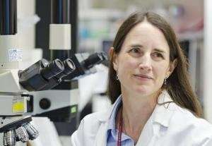 Fred Hutch researchers engineer complex immunotherapy that may target relapsing leukemia