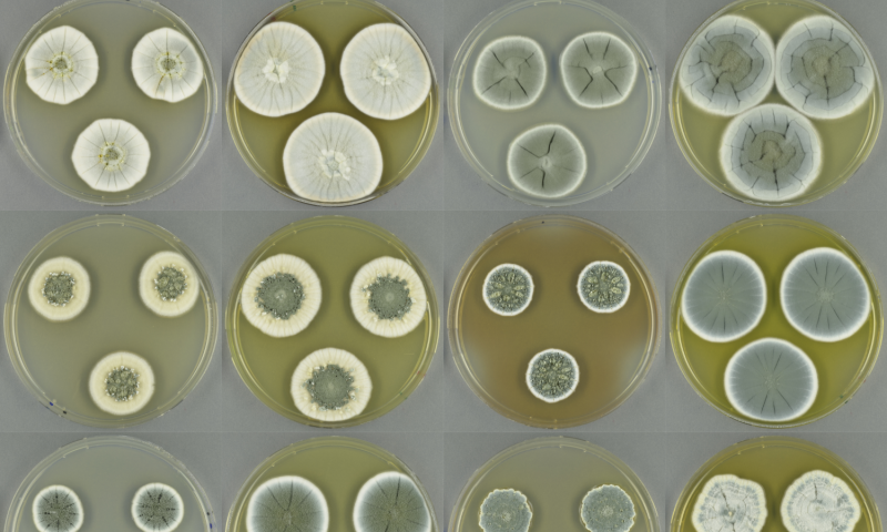 Fungi have enormous potential for new antibiotics
