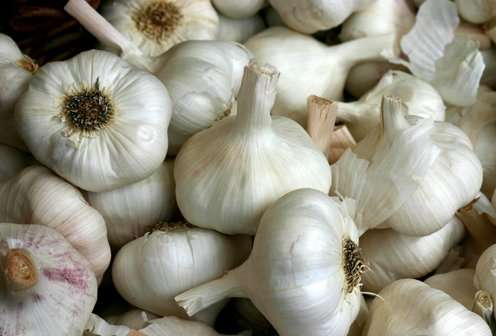 Garlic can fight chronic infections